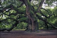 Please sign the petition to halt development next to the 1500 year old Angel Oak on Johns Island, South Carolina.