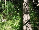Stony Swamp Trail, Ottawa, Ontario, Canada