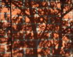 Dogwood, dried winter leaf shadows, Irving, Texas