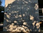 Pecan tree shadow, Pioneer Park downtown Dallas, Texas