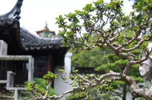 Bonsai, Japanese Gardens, Singapore