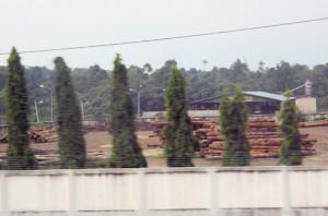 Malaca,Malaysia lumber yard