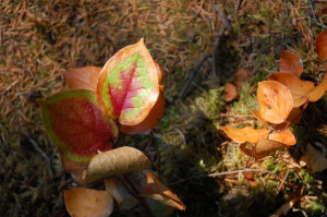 Seasonal changes, Nimkish Lake, BC Canada
