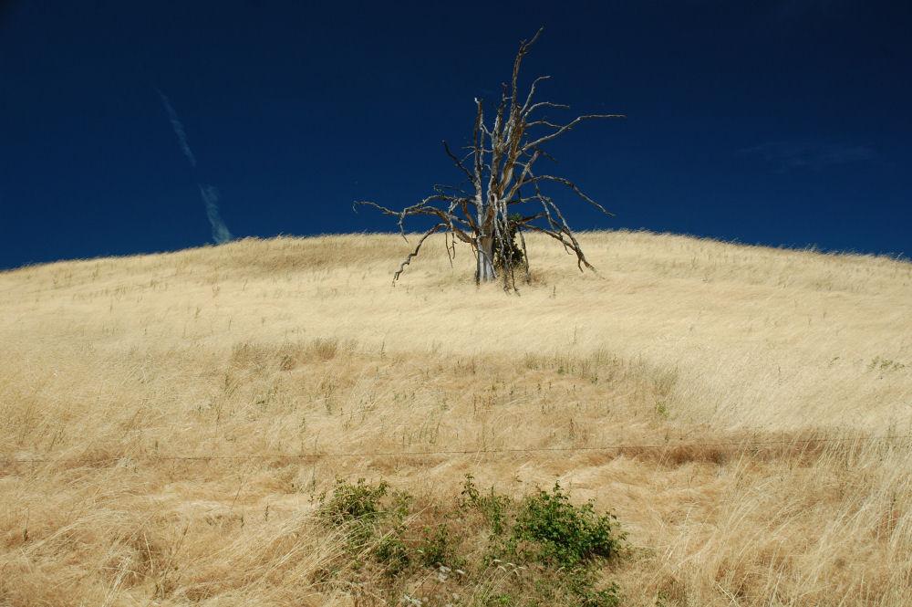 Lone dead tree, Hood River Oregon