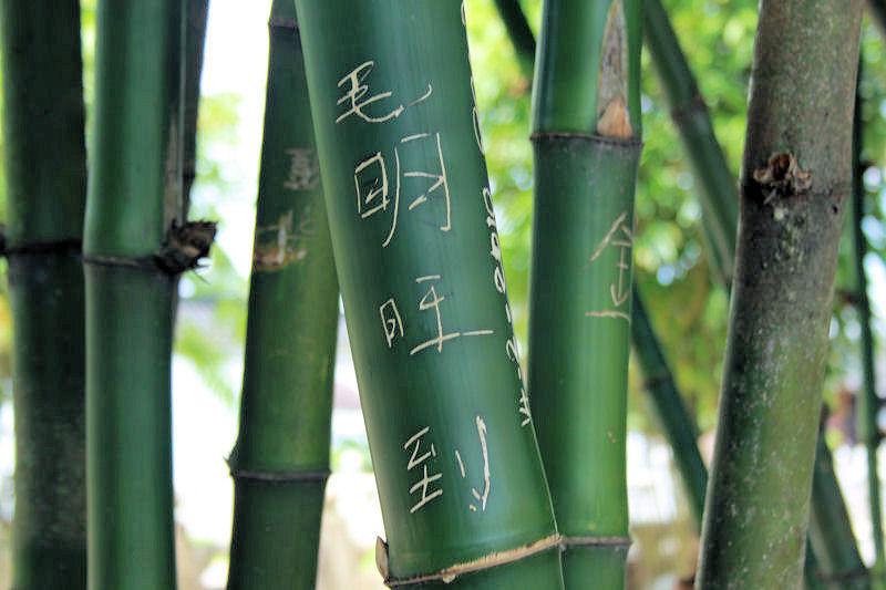Bamboo, Chinese Gardens, Singapore