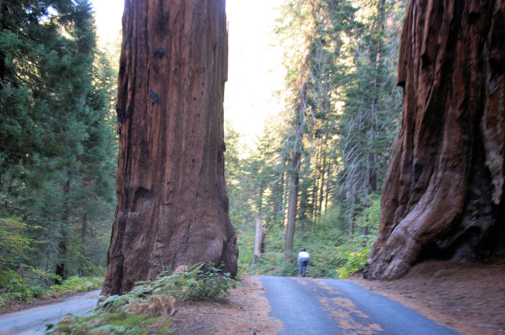 Biking through Sequoia National Forest, California