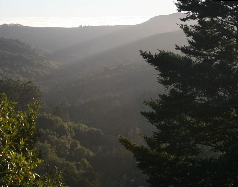 John Muir Forest, Redwoods, Ca