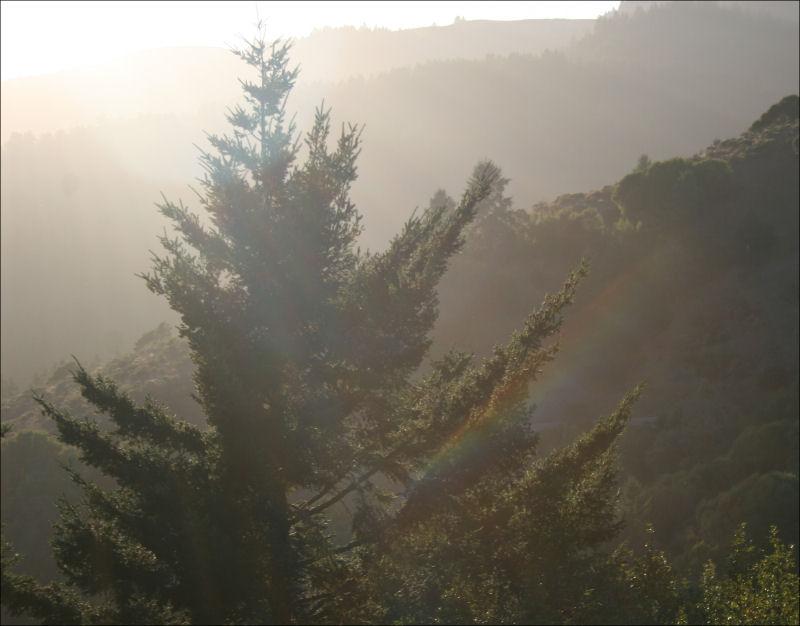 Evening light, John Muir Forest, Ca
