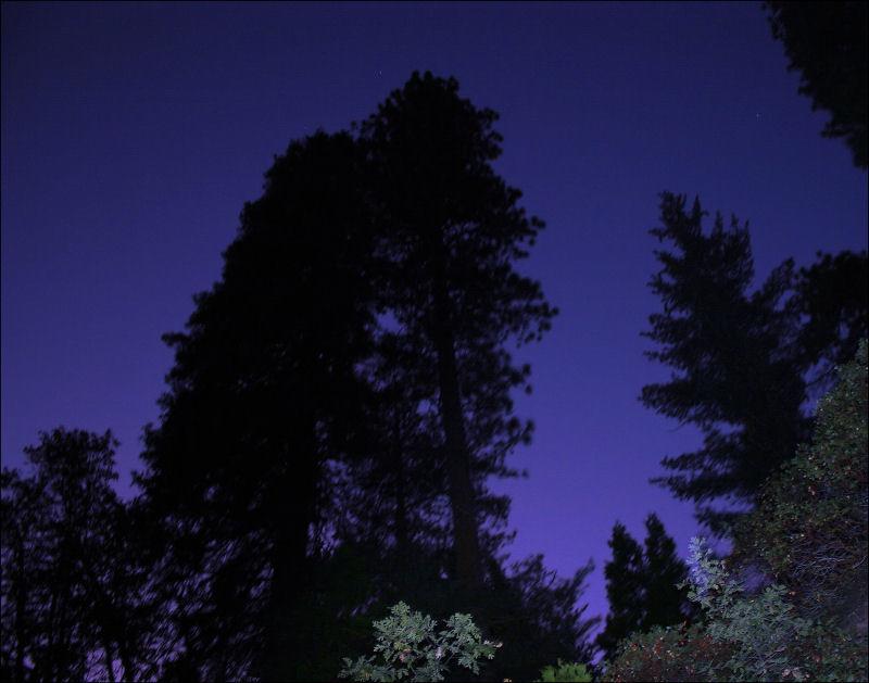 8:13 pm - John Muir Forest, Redwoods, Ca