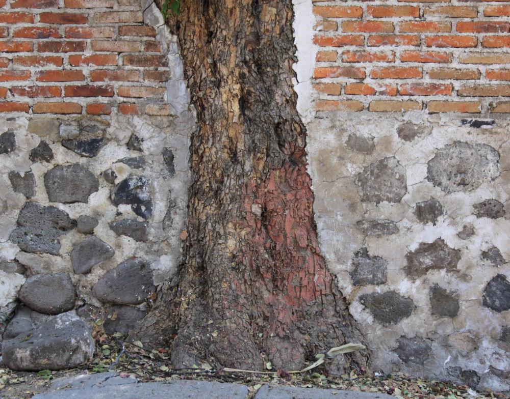 Brick wall built around tree, Ajijic, Mexico