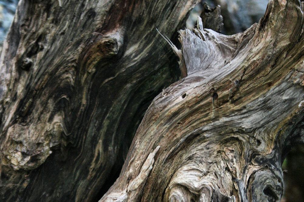 Driftwood designs, Victoria beach, BC
