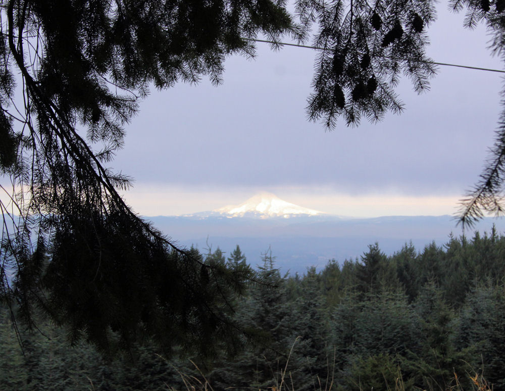 Mt. Hood as seen from Bald Peak, Oregon