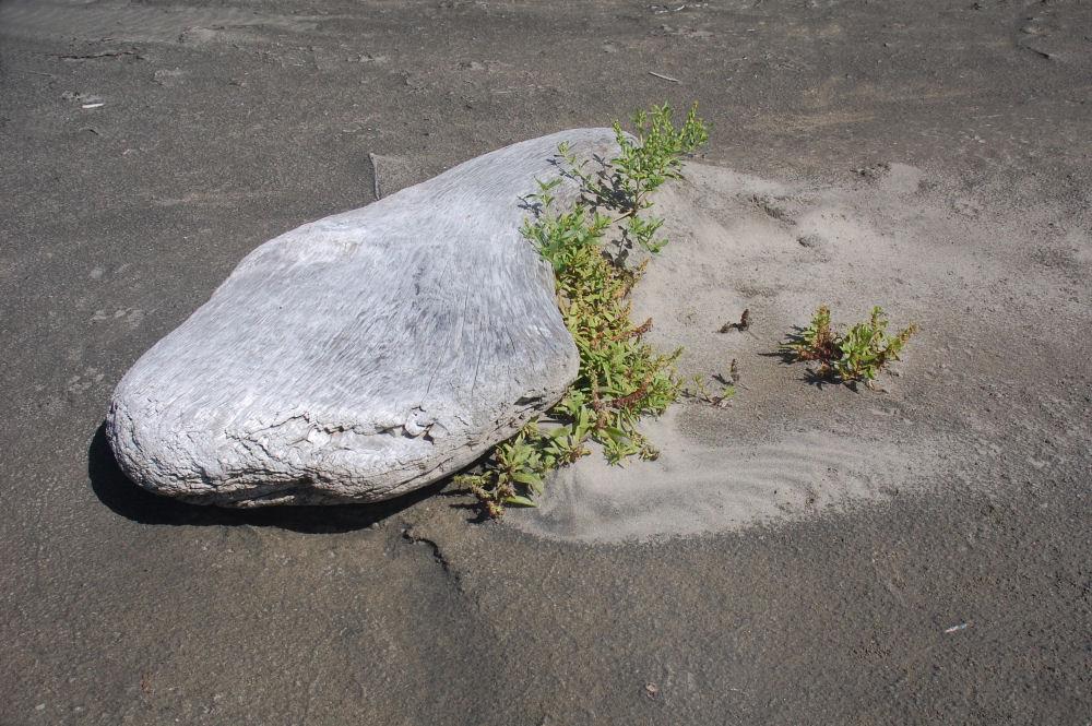 Yin-yang, Oceanside beach, Oregon