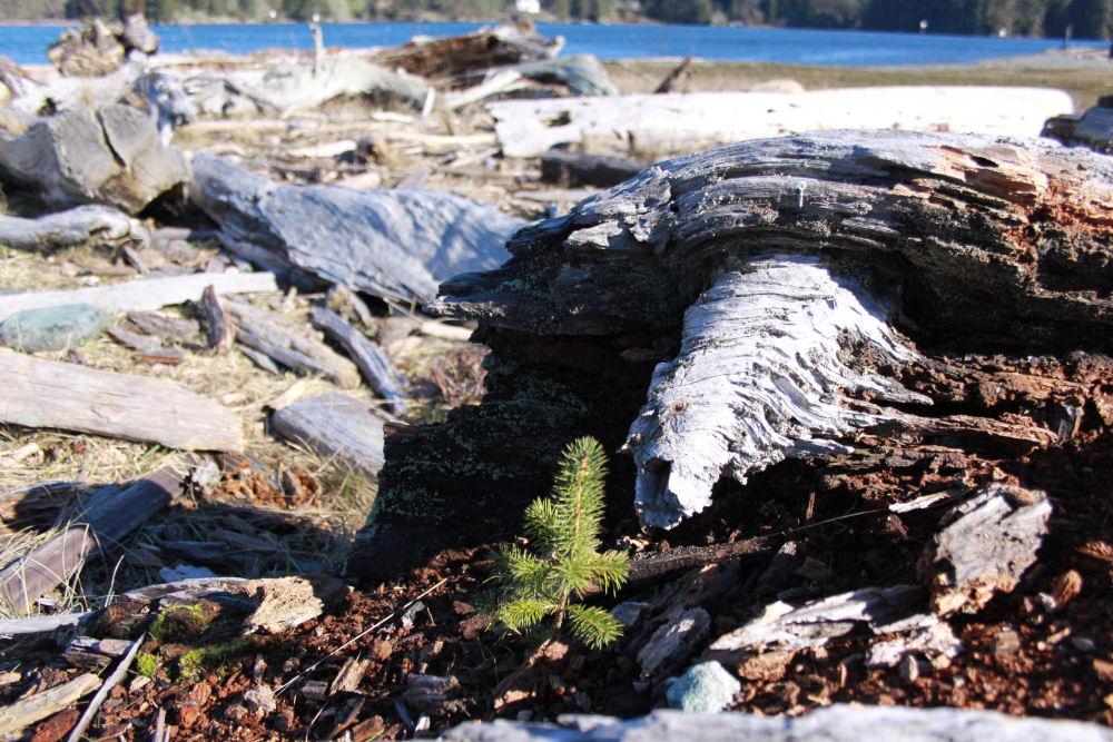 Elk Island, BC