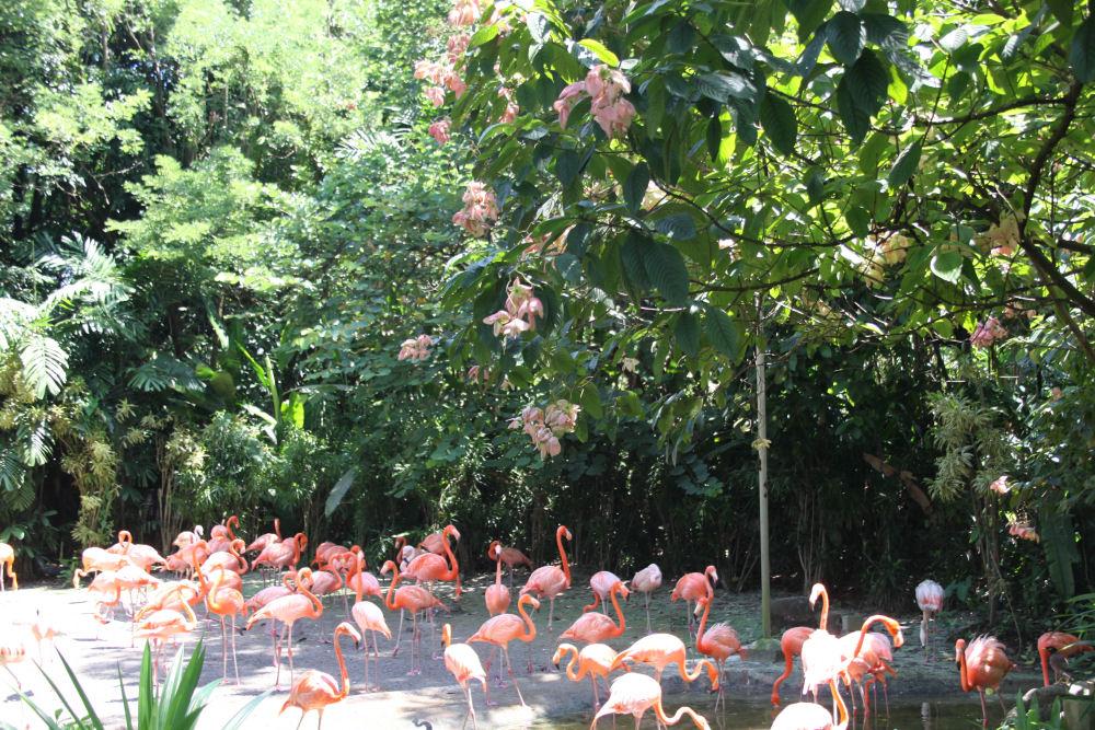 Flamingo, Jurong Bird Bark