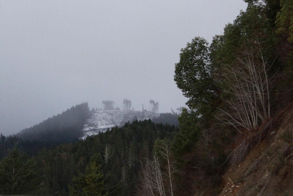 Hwy 101, logging clearcut Olympic Mountain Range, WA