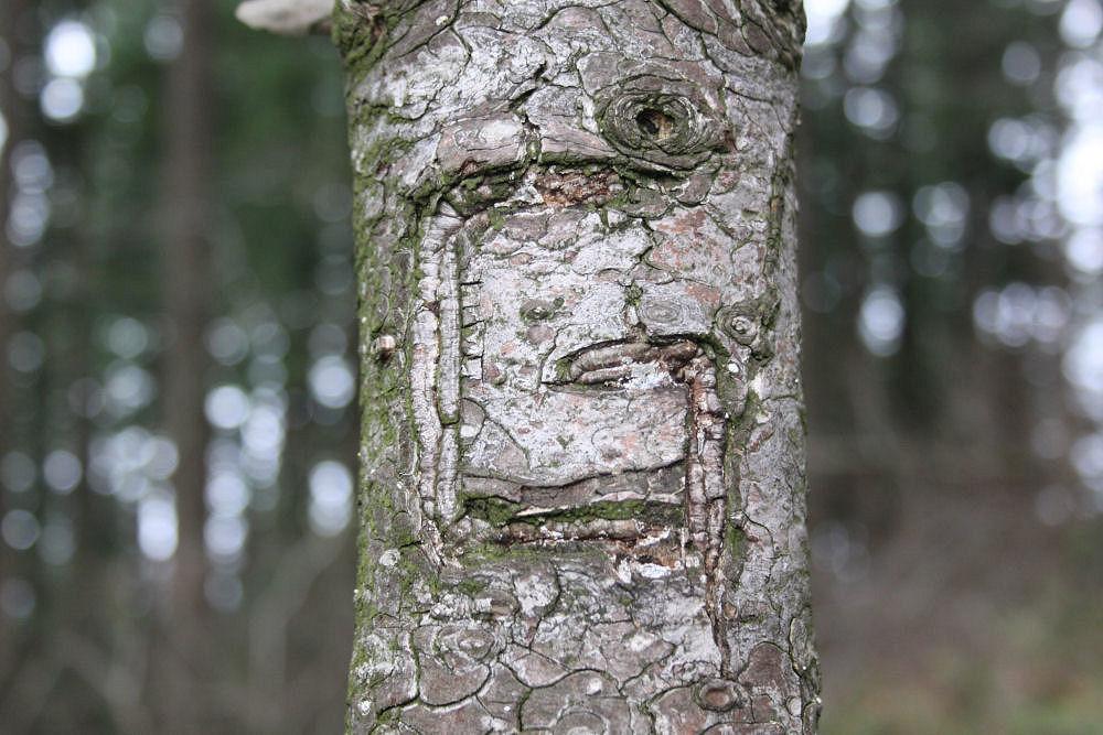 Large carved 'G' in pine trunk, Bald Peak, Oregon