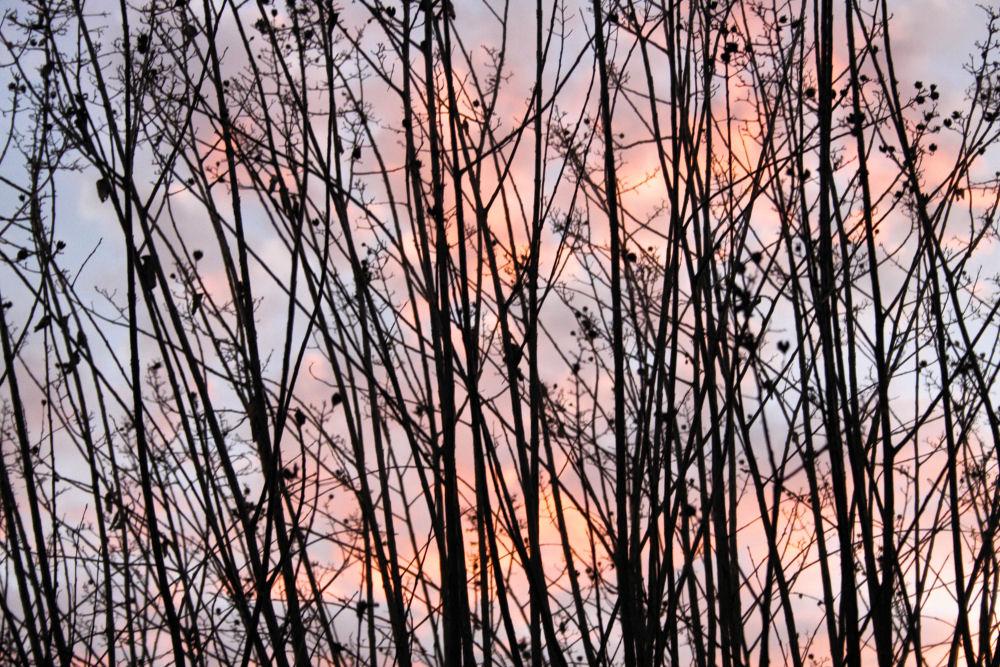 January sunset, Lewisville Texas