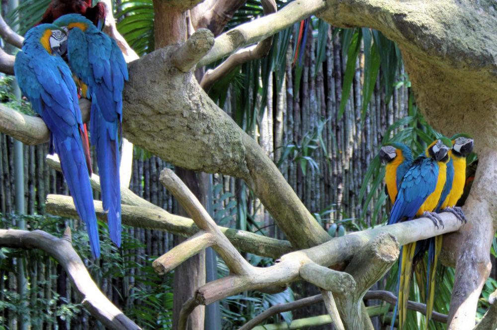 Jurong Bird Park, Mackaws