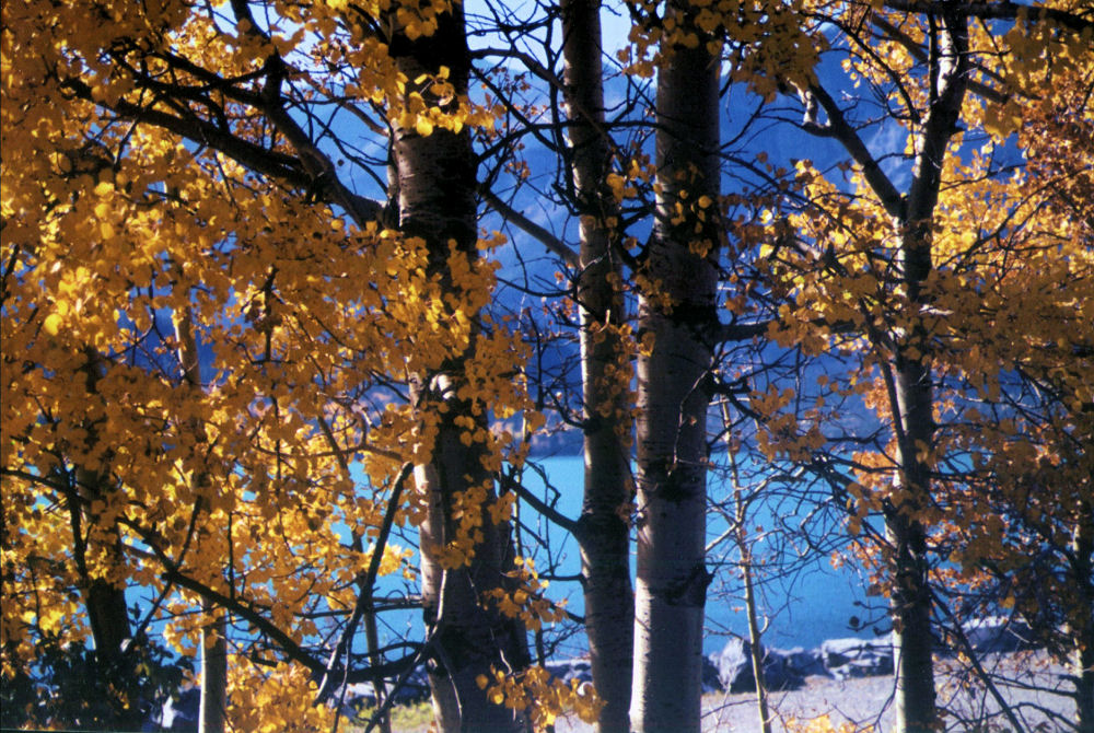 Kananaskas Valley, Rocky Mountains, Alberta in September