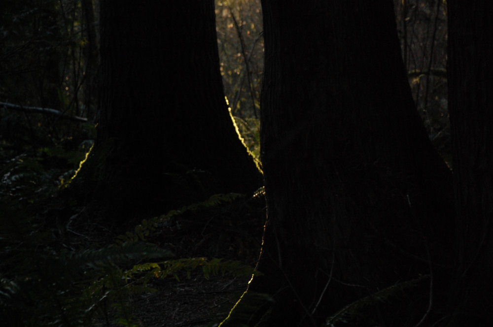 Low light in mid December, Tualatin Hills Nature Park, Oregon