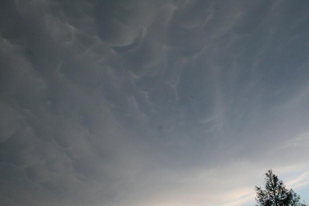 Cypress under mammatus clouds, Lewisville, Texas
