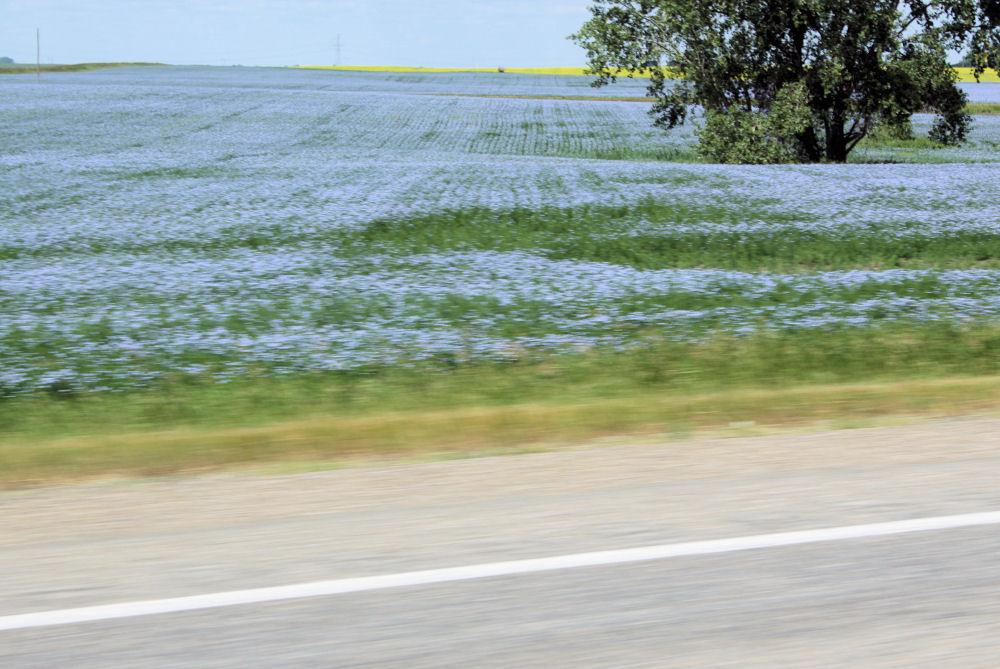 Farming flax, North Dakota