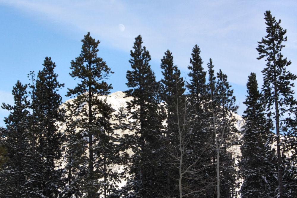 Nakiska mountain ski resort area, Kananaskis County, Alberta