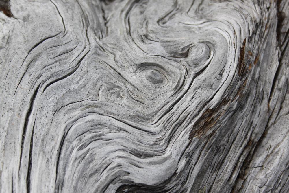 Driftwood designs, Washington coast