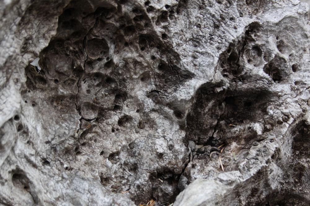Washington coast driftwood detail