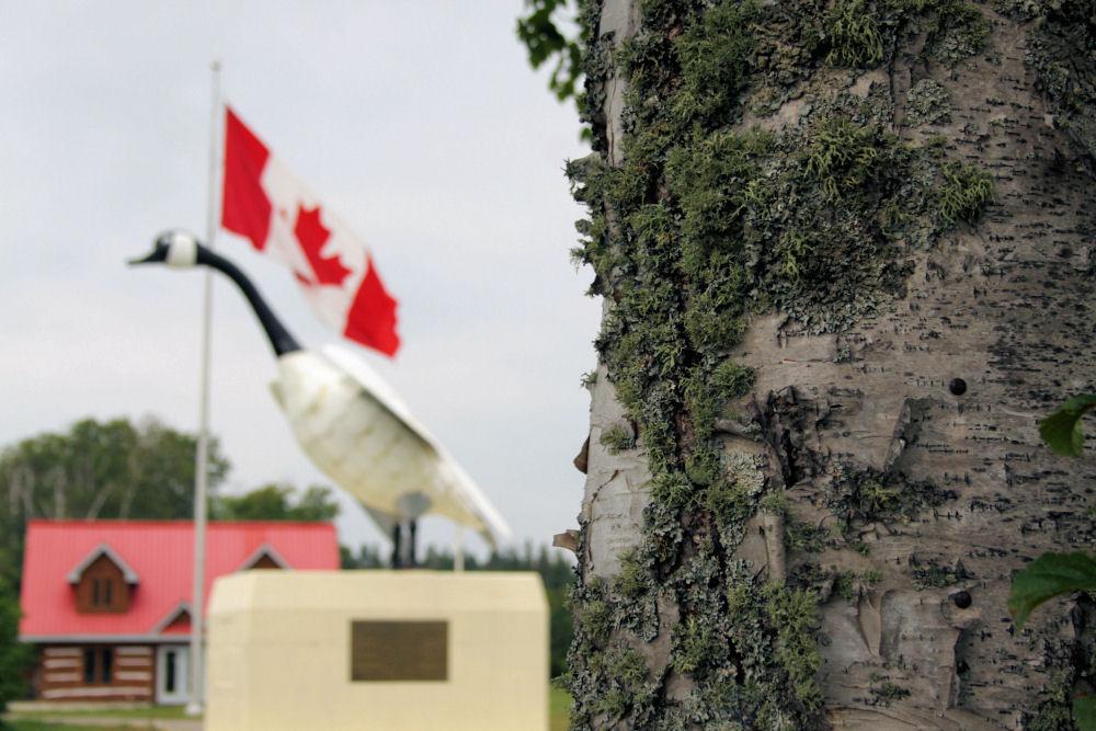 Birch, Wawa, ON Canada