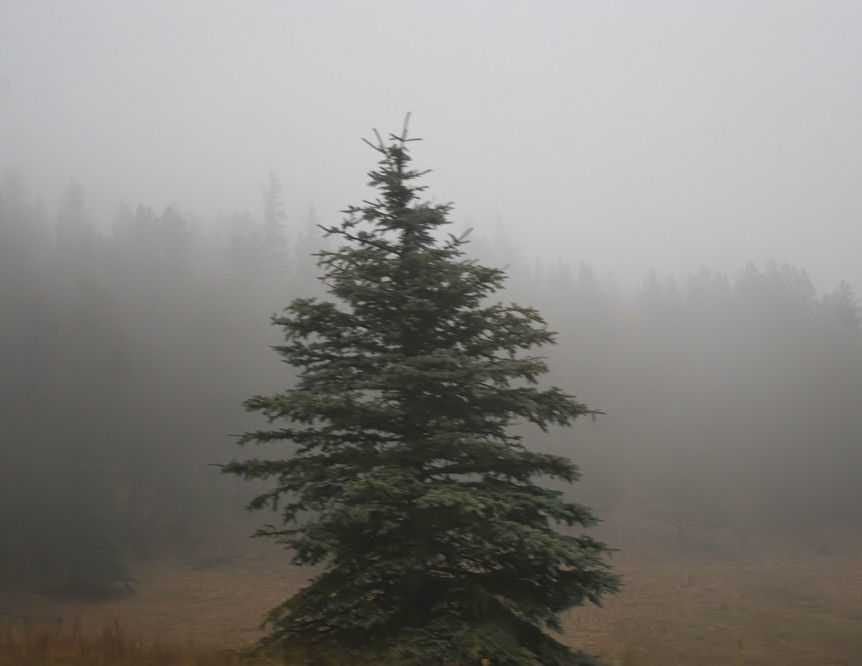 Misty Pine, New Mexico near Taos