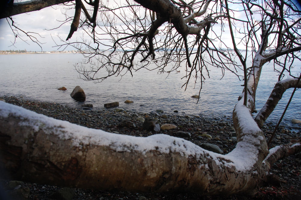 February 7th, 2014, North Saanich beach, BC